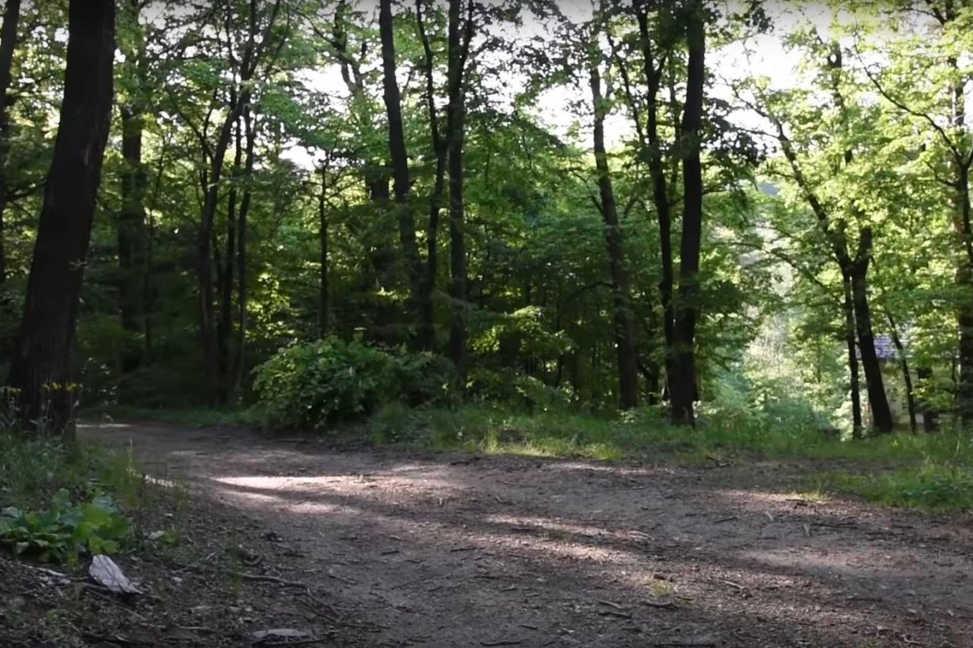 Erdészeti út terve Kőszegen
