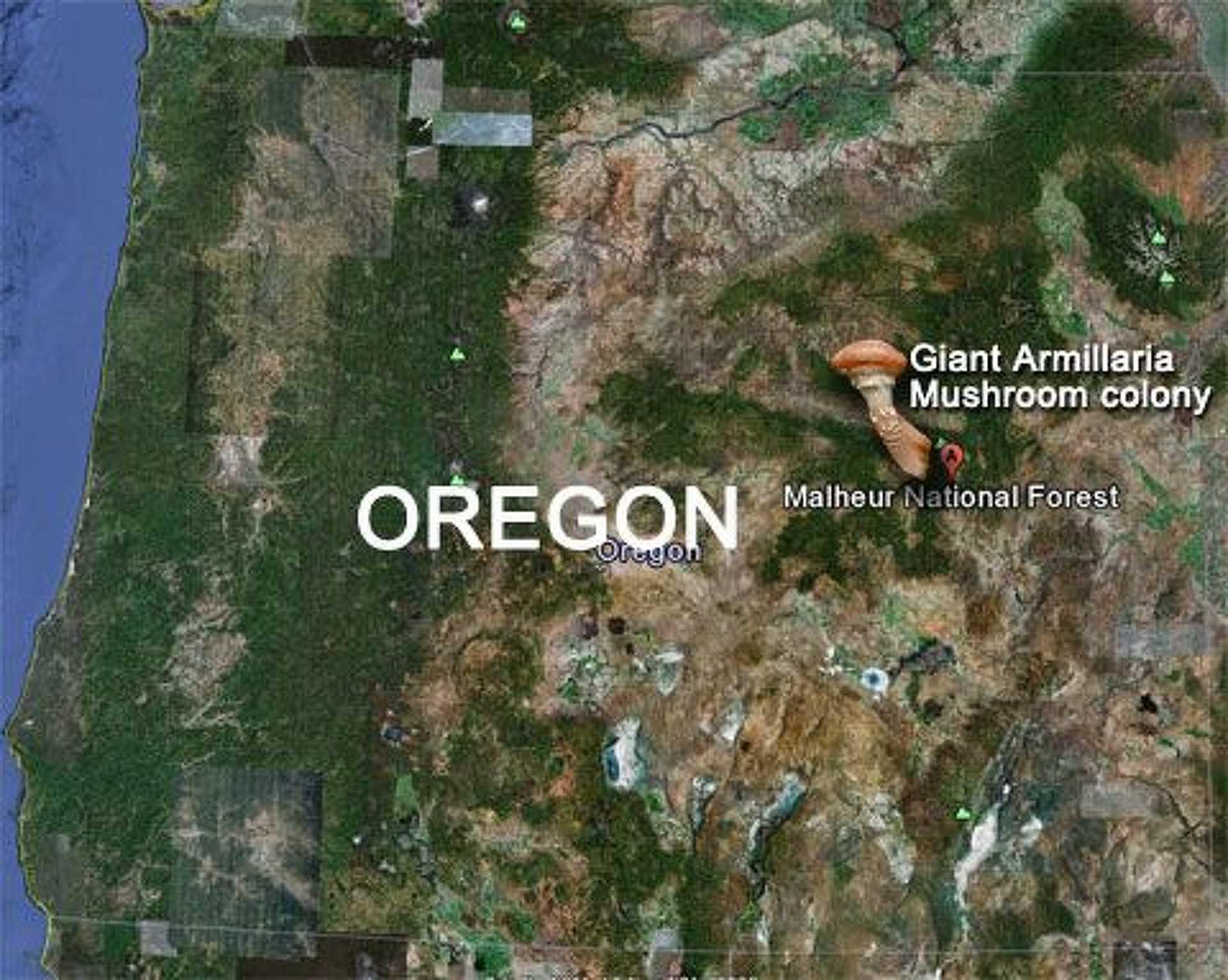 Oregonban található