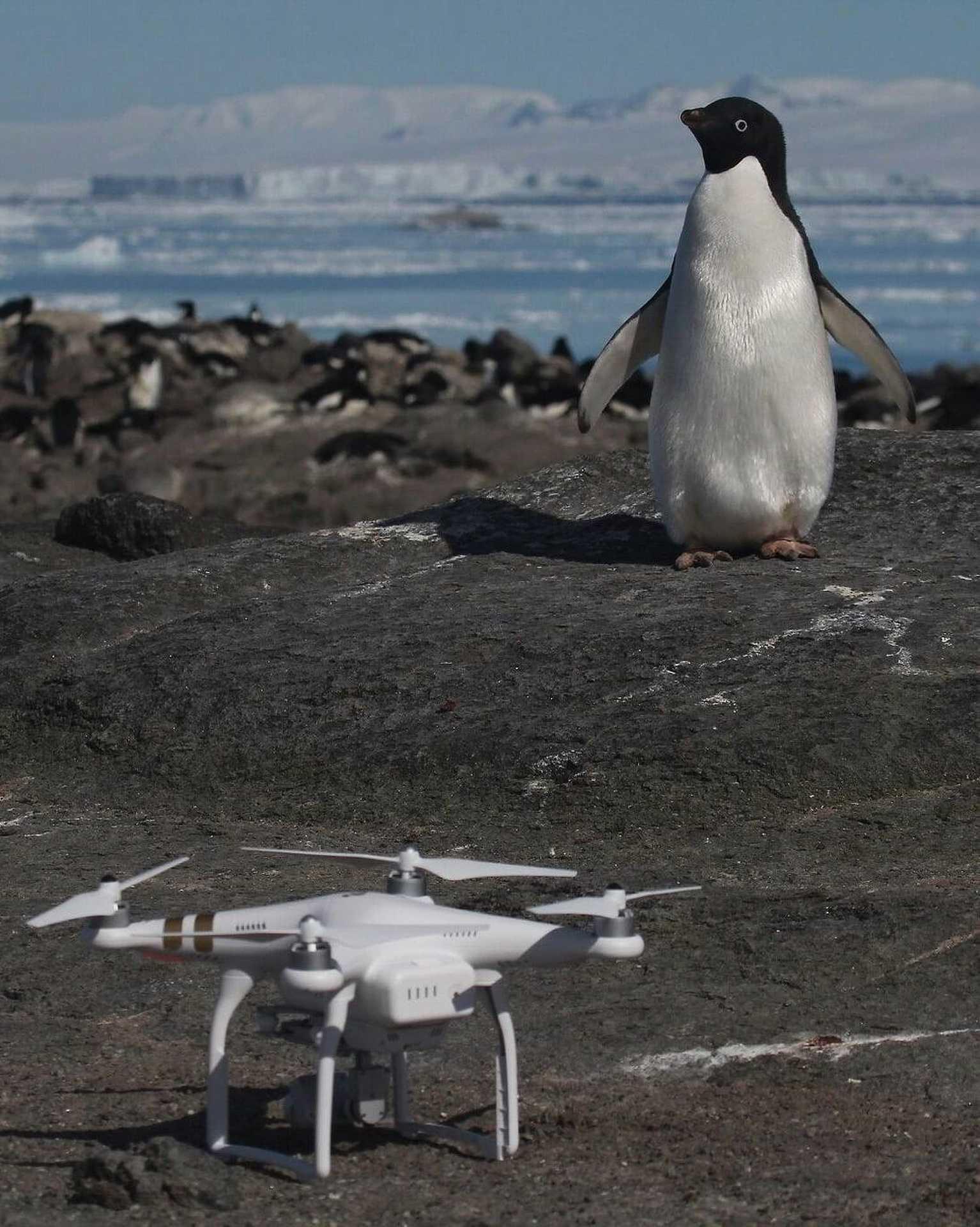 A nemrég felfedezett, eddig ismeretlen óriási pingvinkolónia az Antarktiszon