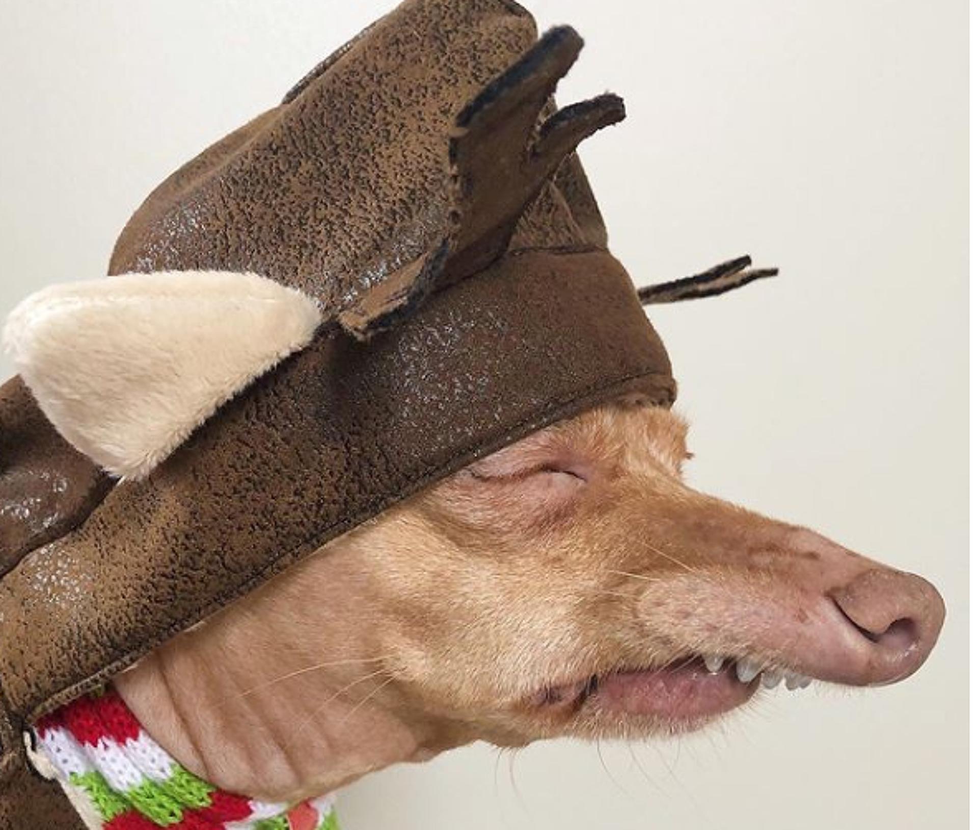 legnépszerűűbn kutyák