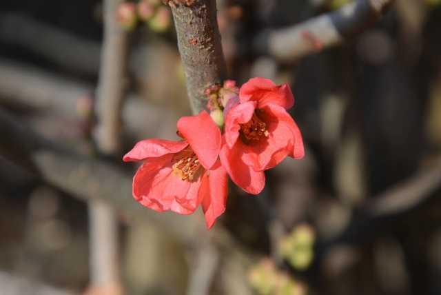 Ébredező természet a Kámoni Arborétumban