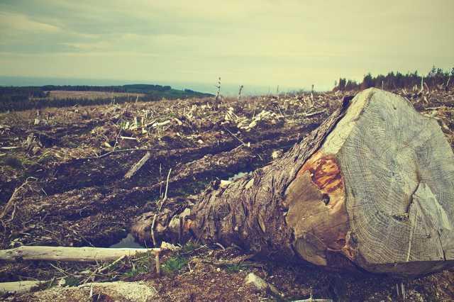 Erdőirtás, fakivágás