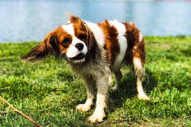 Újranyitott az Abért-tó kutyastrandja