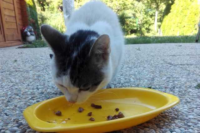 Elveszett cica a Minerván