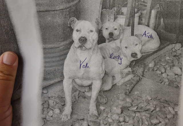 Ölbői kutyatámadás tárgyalás