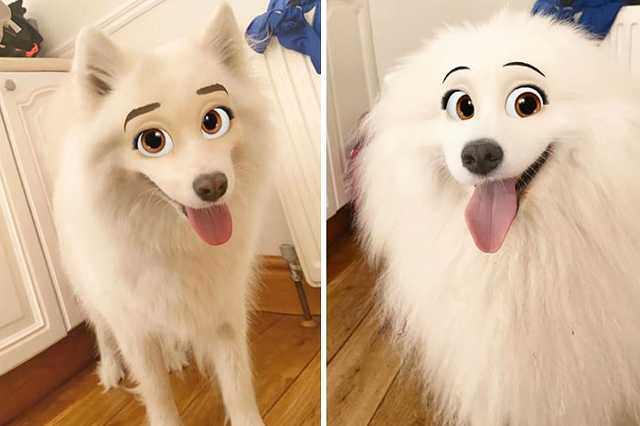 kutya filter
