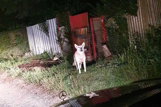 Kóbor kutya saga a szombathelyi Parkerdőben