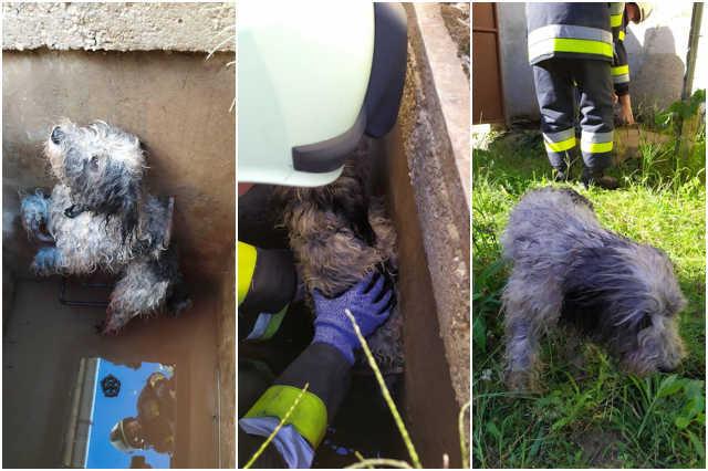 Vízóraaknába esett egy kutya Hosszúperesztegen