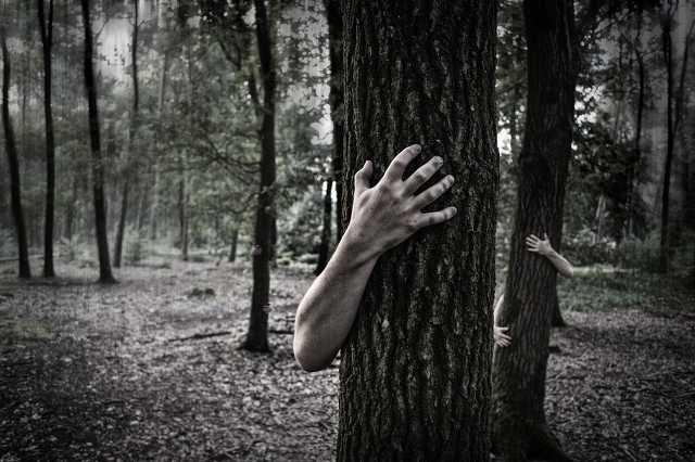 Horror, félelem, erdő