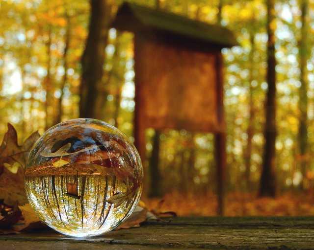 Csodálatos ősz a Farkaserdőben ♥