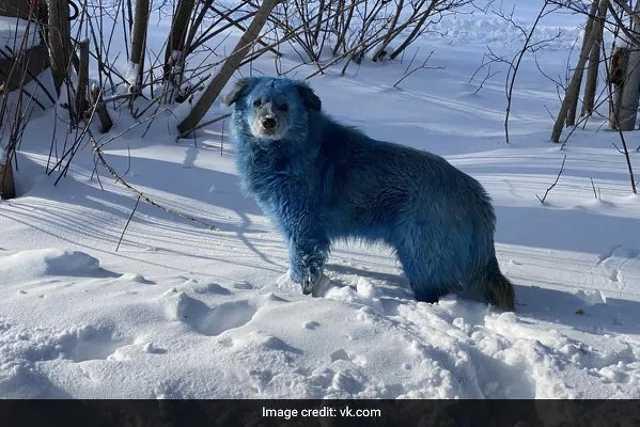 Kék kutya