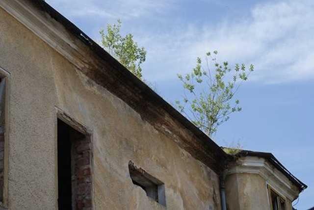 Fák nőnek a szentgotthárdi romhotel tetején