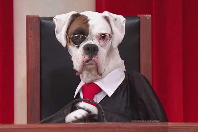 Állatok bíróság előtt