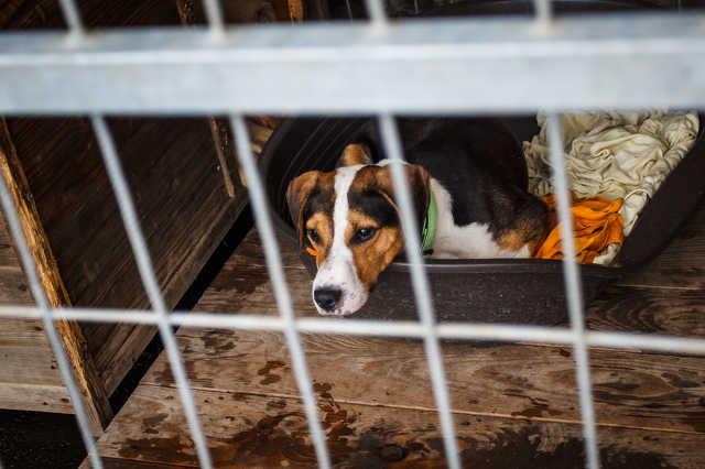 Mobilgarázsokat kapott a Fekete István Állatvédő Egyesület