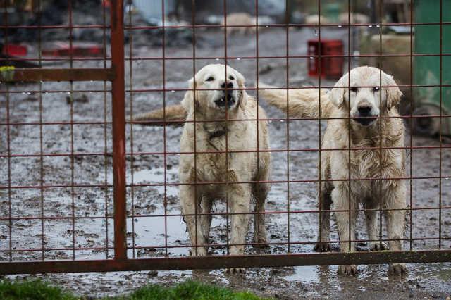 Egyházasrádóci kutya- és disznótartási probléma