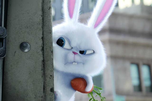 Ne vegyél húsvéti nyuszit