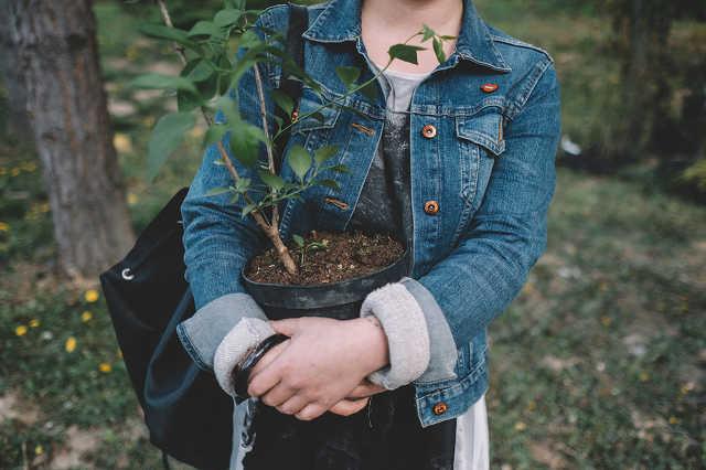 Fogadj örökbe egy fát! - akció az arborétumban