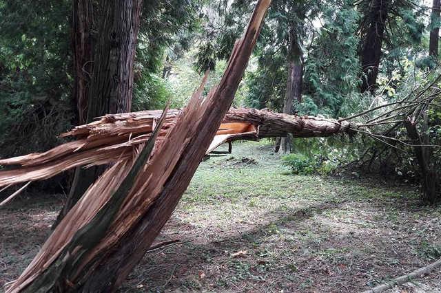 Kidőlt fa a Kámoni Arborétumban