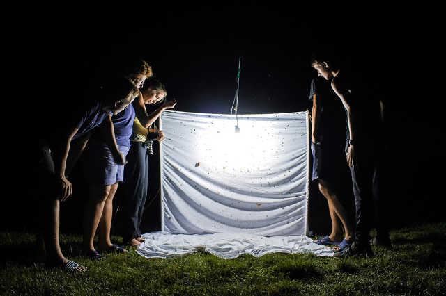 Éjszakai rovarvadászat