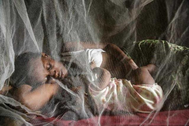 Védekezés a maláriaszúnyog ellen