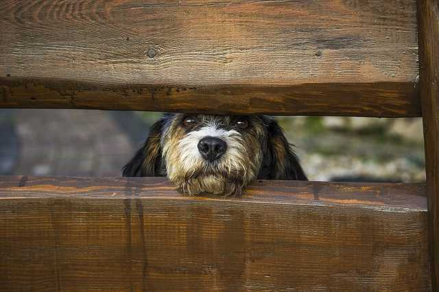 Kutya, kerítés, cuki, harap, megatöbbi