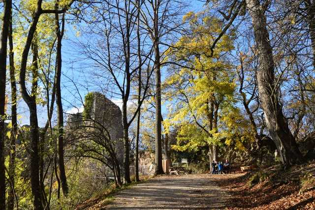 Bécsi erdő