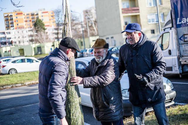 Karácsonyfát osztottak a balodali képviselők