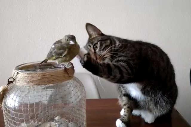 Cica és kismadár