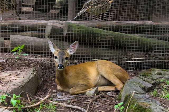 Ellopták a parádfürdői mini-állatkert állatait