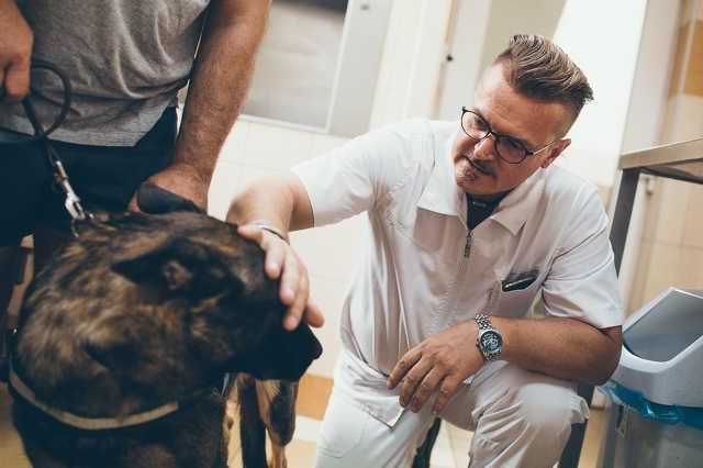 Dr. Peresztegi Attila a szombathelyi állatkórházban
