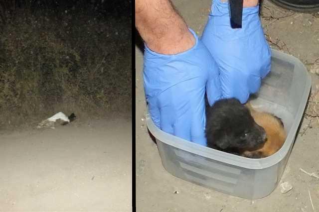 Zsákban nyüszítő kiskutyákat talált egy futó
