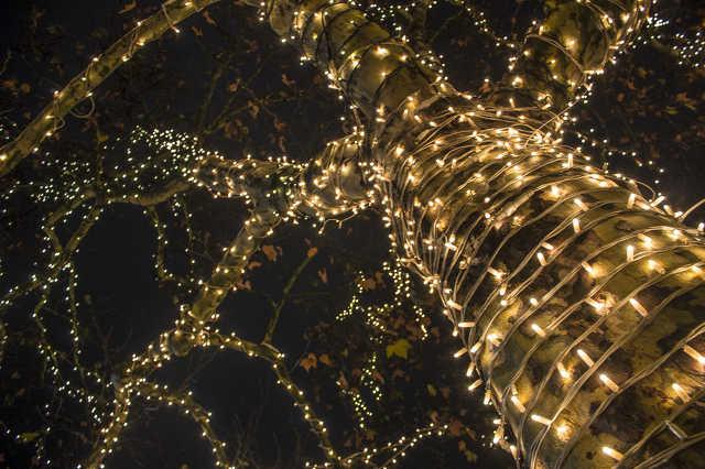 Sárvári fények - november 25. 1:00