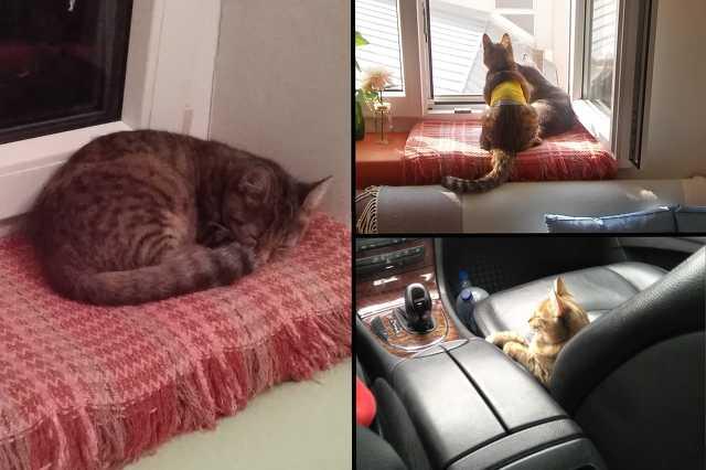 Lujzi, a vesedialízisen átesett macska