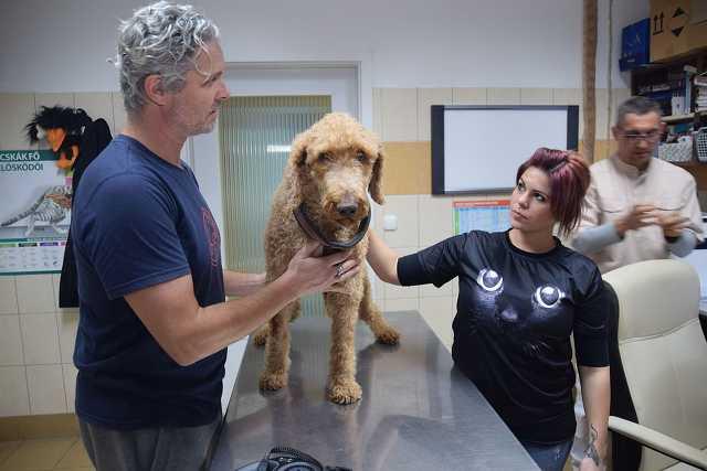 Ügyelet a Szombathelyi Állatkórházban