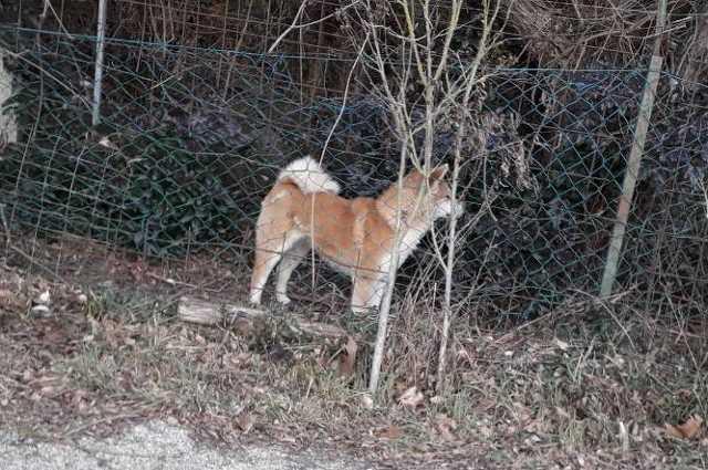 kutyatámadás Szombathely
