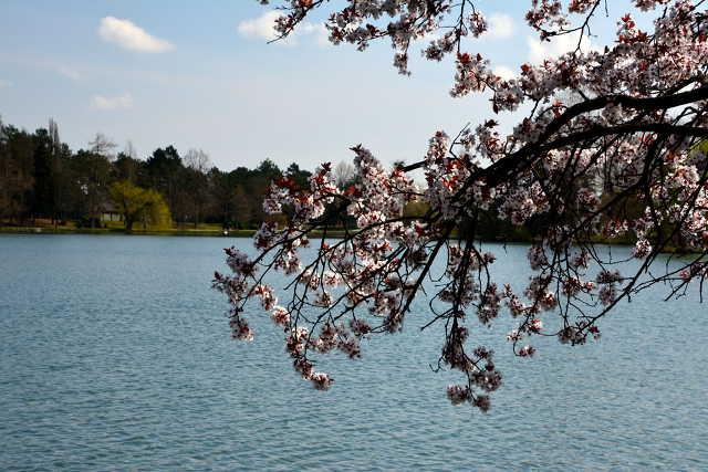 Március végi séta a szombathelyi Csónakázó-tó körül