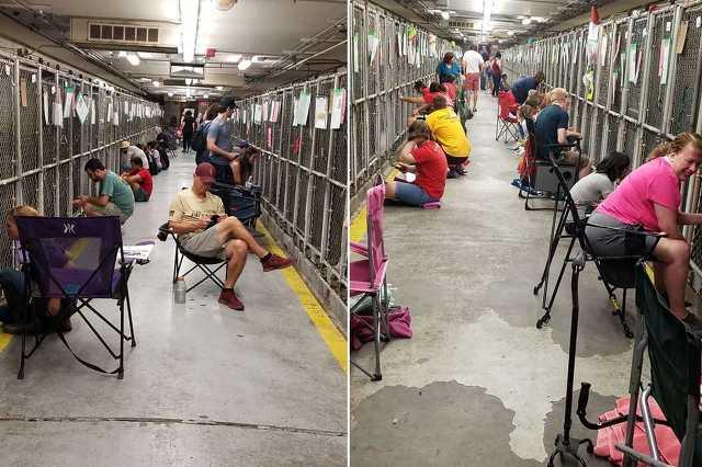 Kutyákat vigasztaló amerikaiak a menhelyen