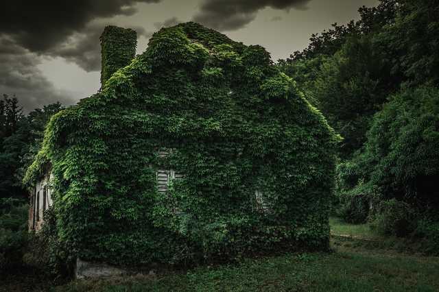 Ház az erdő szélén