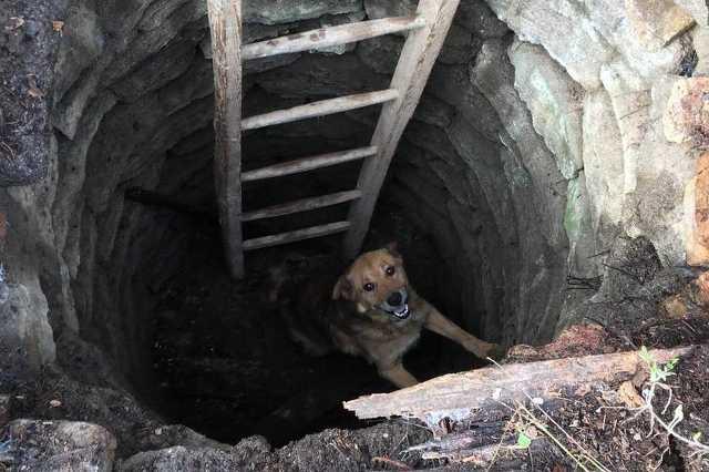 Kótba esett egy kutya Hosszúperesztegen