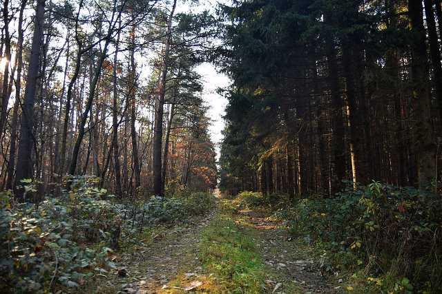 Túrázás a csepregi erdőben