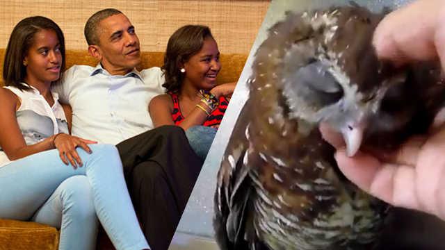 könnyű kevert obama