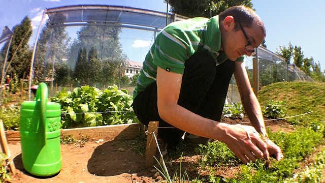 Közösségi kert CÍMLAP