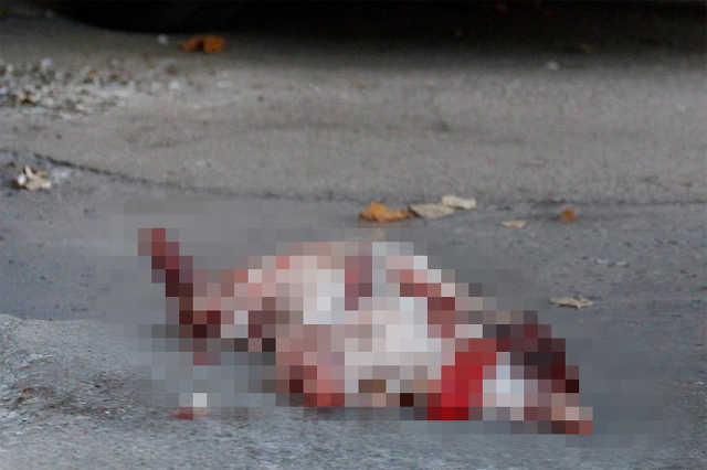 Megnyúzott kutyatetem az MSZP-iroda előtt Miskolcon