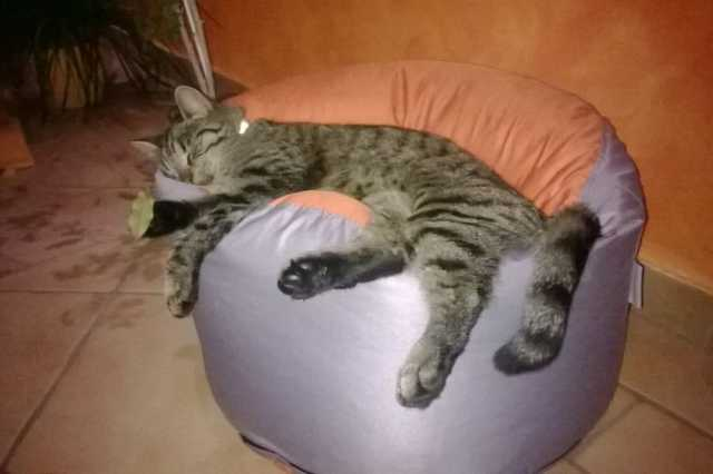 Oszi (aki lány) szeret csavarogni, de a sok mászkálás után édes a pihenés