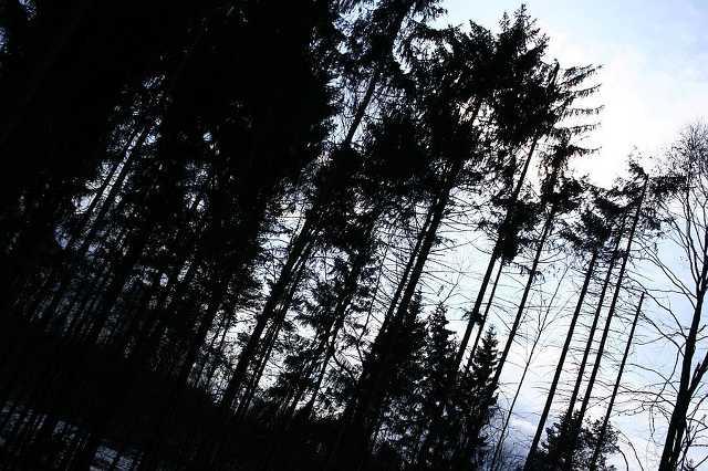 Kísértet-luc-erdő