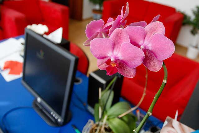 Szobanövények az irodában