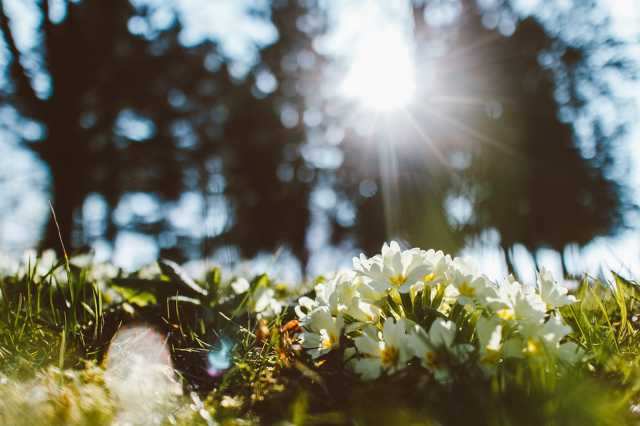 Tavasz az emlékműnél
