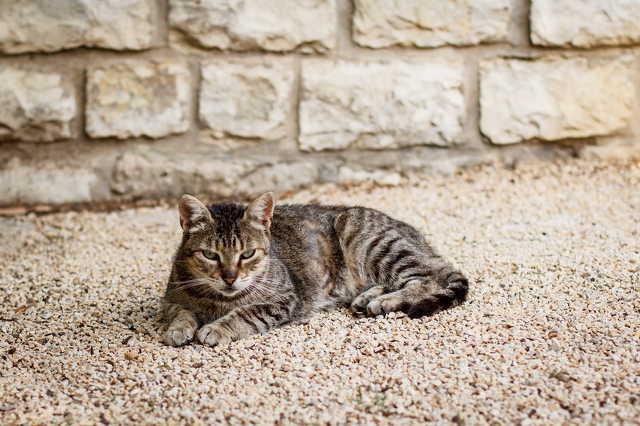 Kóbor macska a Szívkórháznál