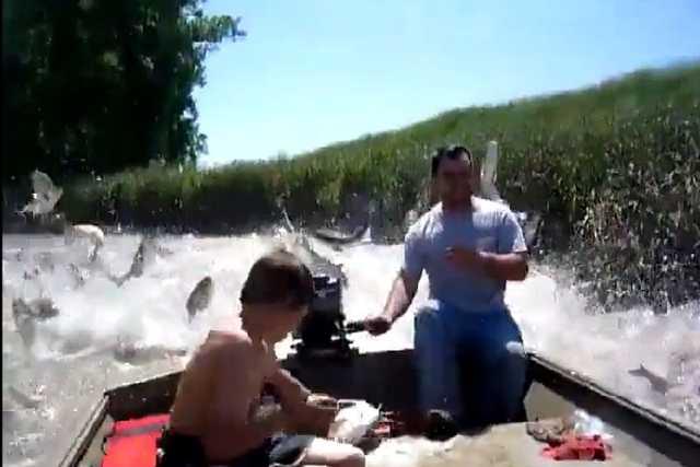 Megőrülnek a halak a motoros csónaktól