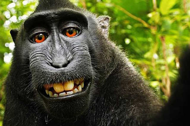 Szelfiző majom
